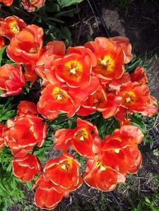 Mirar las flores