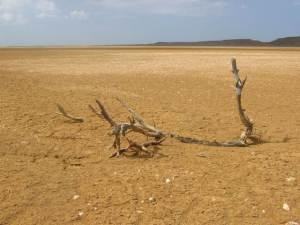 El desierto del Animal de Ruta